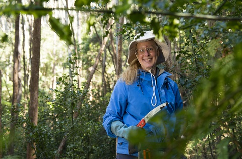 Fern Tree Bushcare Volunteer