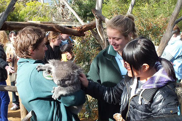 kids patting koala at Bonorong