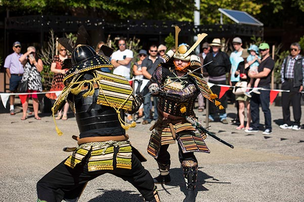 Japanese Samurai battling each other