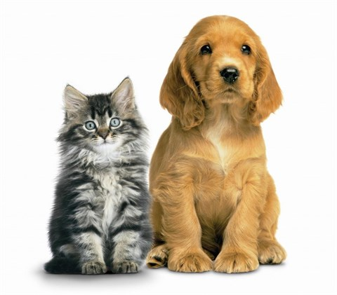 Cat_and_Dog-1024x899.jpg
